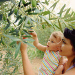 Beneficios del aceite de oliva para bebés